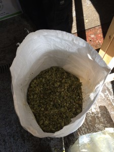 5 Kilos of Styrian Bobek hops. I was handed a vacuum sealed 5K bag and asked to break it up and put it in this bag